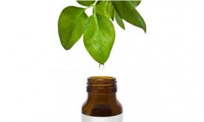 Is Tea Tree Oil Acne Treatment Effective tea tree leaf
