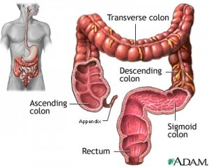 treatment for ibs diagram