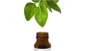 Is Tea Tree Oil Acne Treatment Effective tea tree leaf